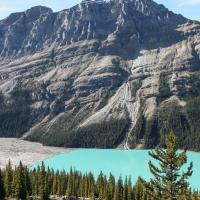 Peyto Glacier & Lake