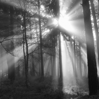 Sunlight in New Forest