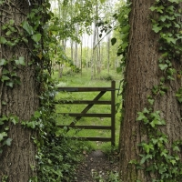 Another entrance to Narnia? Great Newbridge Copse