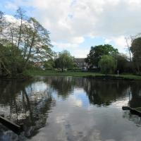 Ballard lake on daily walk