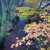 Autumn near Burley