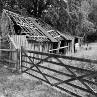 New Forest shed - disused!